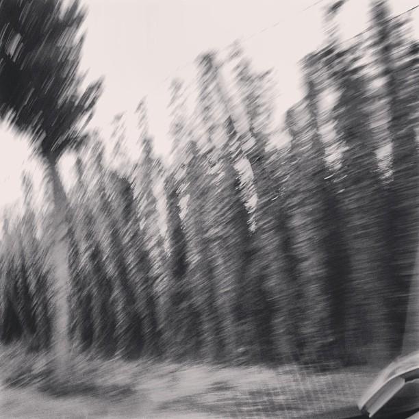 Instagram: Hopfengarten in schwarz/weiss #hallertau