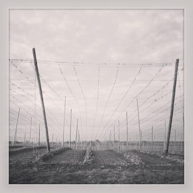 Instagram-Photo: Hopfengarten im Oktober #hallertau