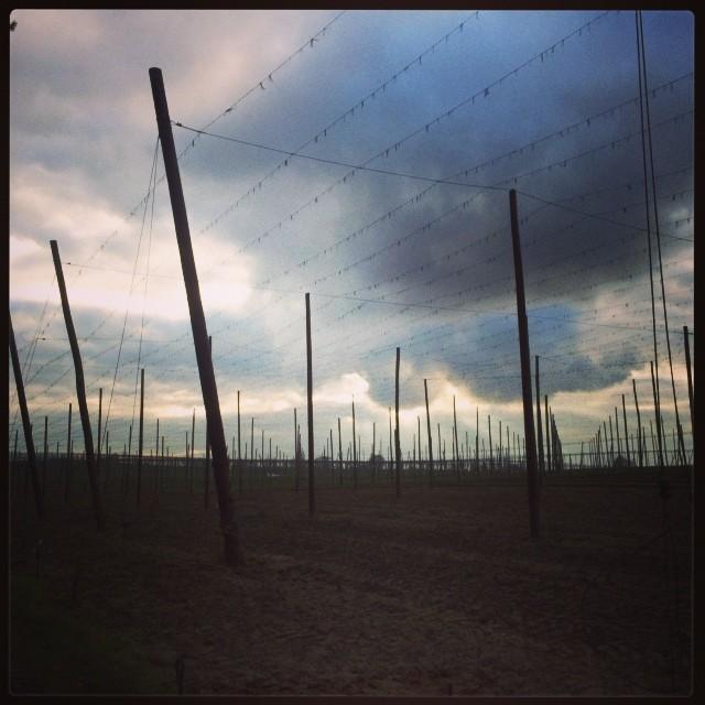 Instagram-Photo: Leerer Hopfengarten vor Wolkenfront