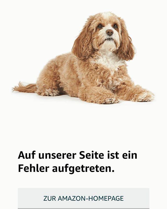 Aber was kann der Hund dafür?